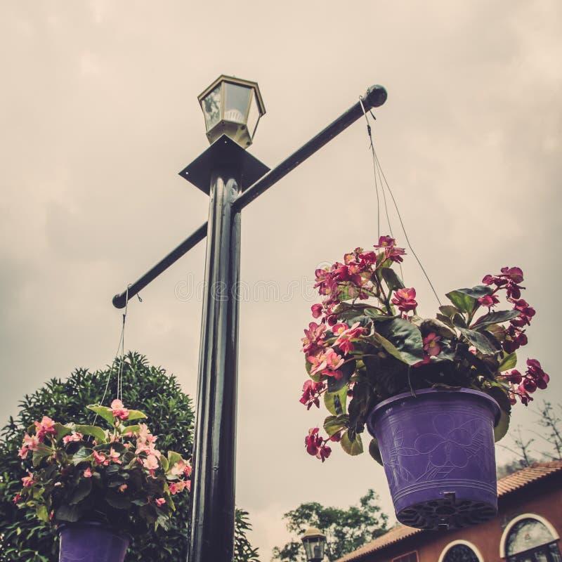 Download Bloemmand Het Hangen Op Polen. Stock Afbeelding - Afbeelding bestaande uit gardening, kleur: 39101625