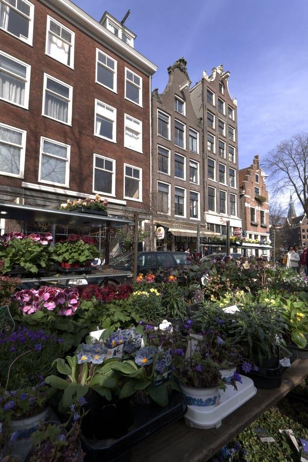 Bloemmarkt in de jordaan installaties van Amsterdam stock foto's
