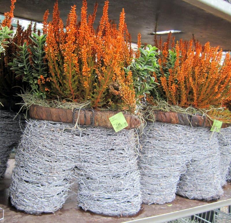 Bloemmarkt in Holland Tuincentrum stock foto