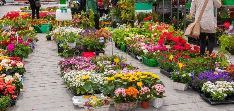 Bloemmarkt in stad op zonnige dag royalty-vrije stock afbeeldingen