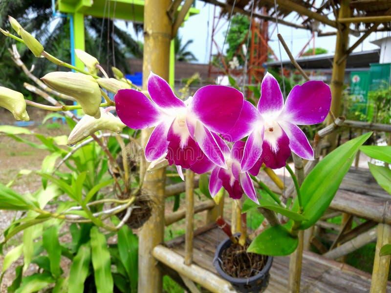 Bloemorchidee stock foto's