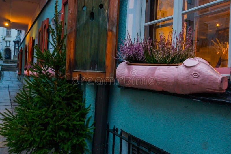 Bloempot in de vorm van een roze varken Straat in de oude stad Groene Kerstboom Estlands Kapitaal, Tallinn stock afbeeldingen