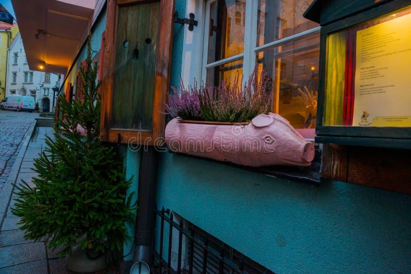 Bloempot in de vorm van een roze varken Straat in de oude stad Groene Kerstboom Estlands Kapitaal, Tallinn stock foto's