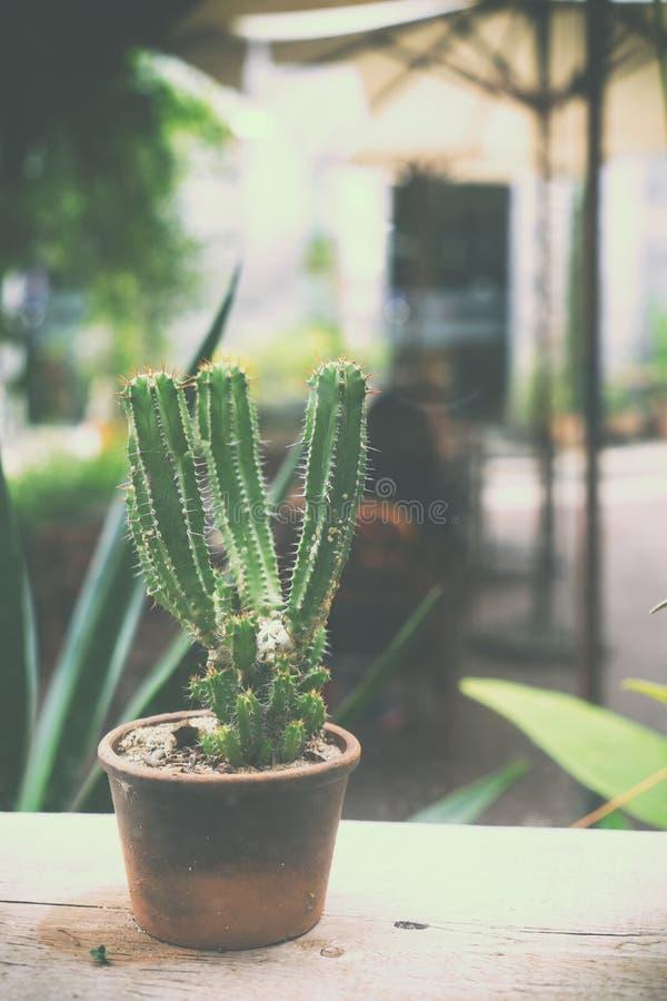 Bloempot in koffie - cactusdecoratie van koffiewinkel royalty-vrije stock afbeeldingen