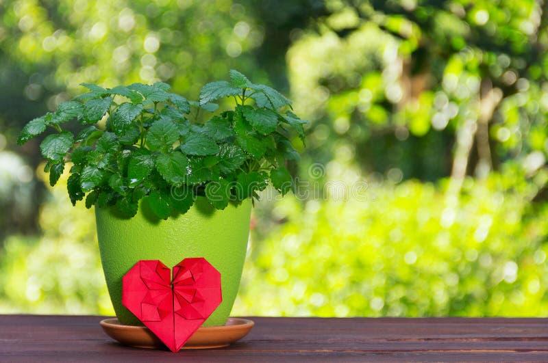 Bloempot met aromatisch munt en hart van origami Muntstruik op een natuurlijke groene achtergrond Romantische gift royalty-vrije stock fotografie