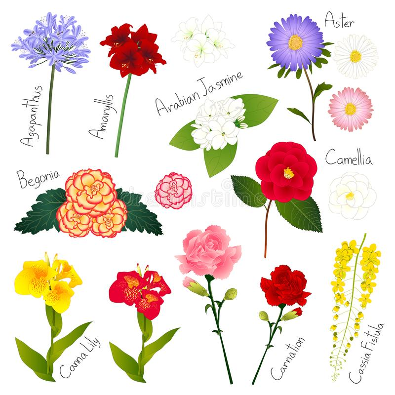Bloemreeks 1 Flora Vector Collection stock illustratie