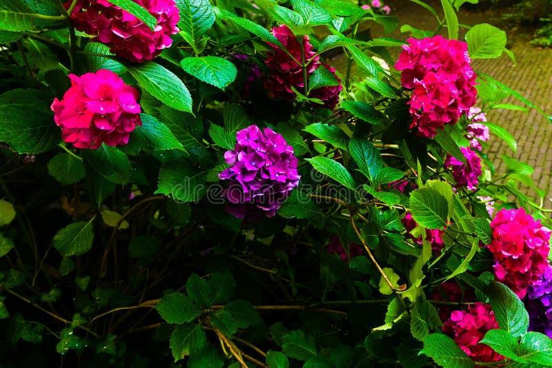 Bloemtuin die in de de zomerzon bloeien stock foto's