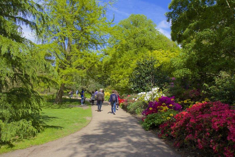 Bloemtuin in het park van Greenwich, Londen stock afbeeldingen