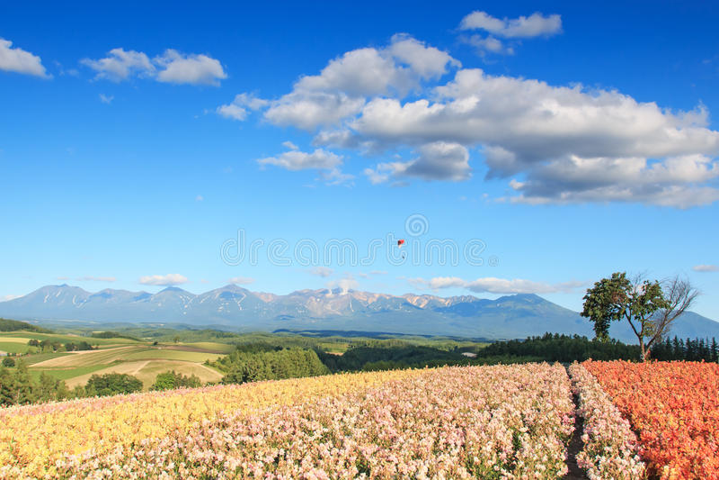 Bloemtuin in Kamifurano, Hokkaido, met bergmening Op achtergrond een glijscherm en vele toeristen stock foto's