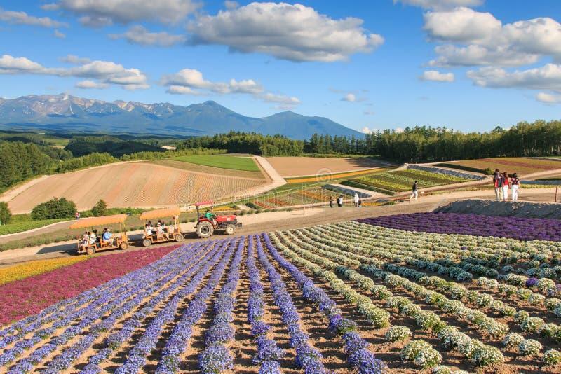 Bloemtuin in Kamifurano, Hokkaido, met bergmening Op achtergrond vele toeristen royalty-vrije stock afbeelding