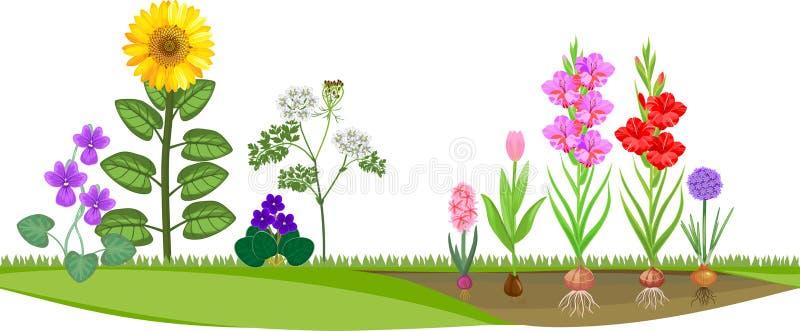 Bloemtuin met verschillende bloeiende installaties vector illustratie