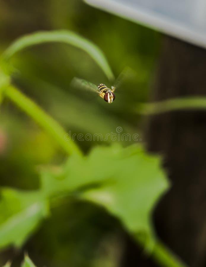 Bloemvlieg over een tuin royalty-vrije stock fotografie