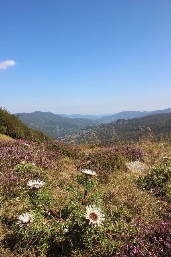 Bloemweide in de Apennine-bergen stock foto