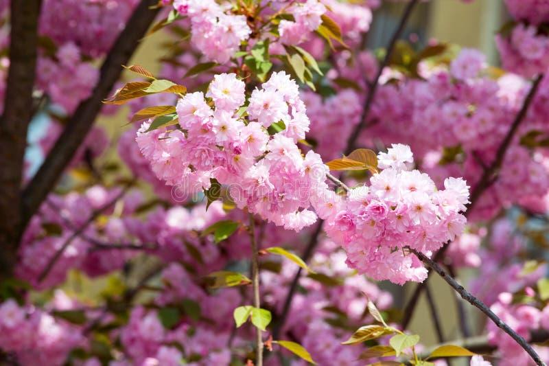Bloesem, bloei, het bloeien royalty-vrije stock foto