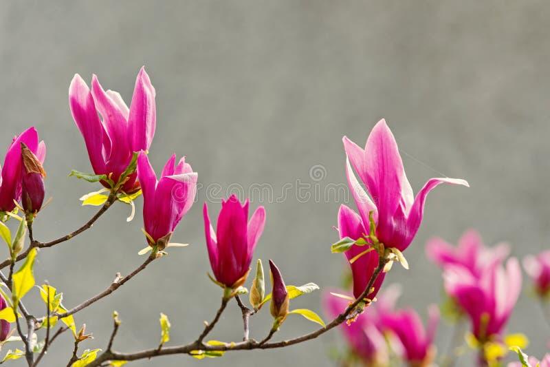 Bloesem, bloei, het bloeien royalty-vrije stock afbeeldingen