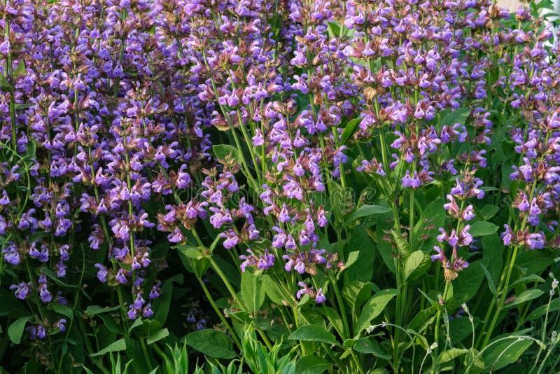 Bloesem Wijze bloemen in tuin stock fotografie