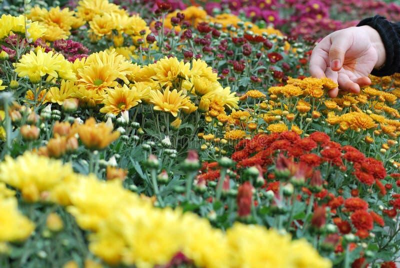 Bloesembloemen royalty-vrije stock afbeeldingen