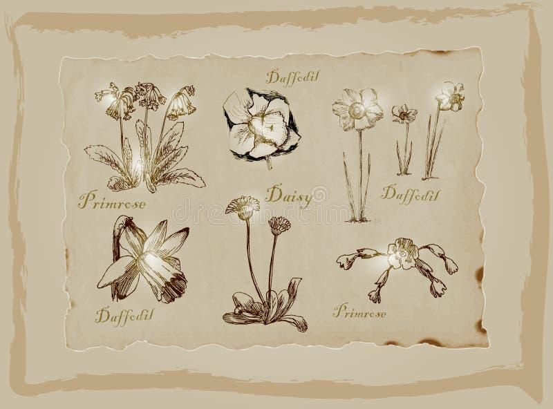 Bloesems en Bloemen - een hand getrokken pak Uit de vrije hand tekening vector illustratie