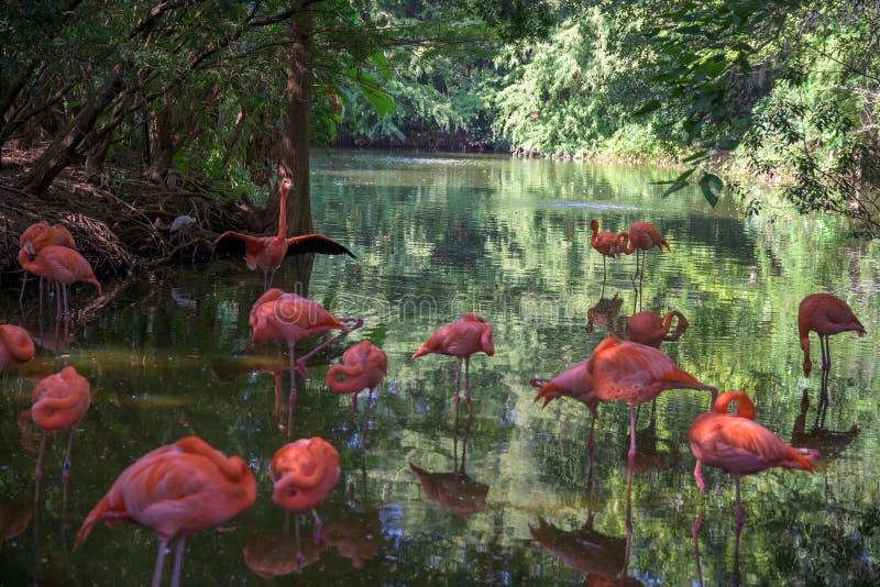 Blok van roze flamingos in ondiep water royalty-vrije stock foto's