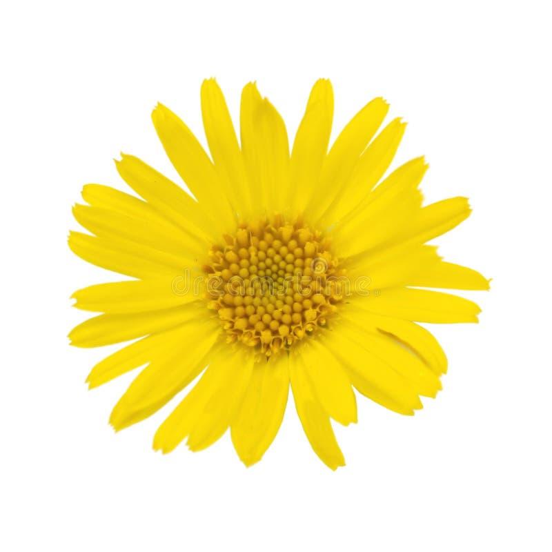 blom royaltyfri fotografi