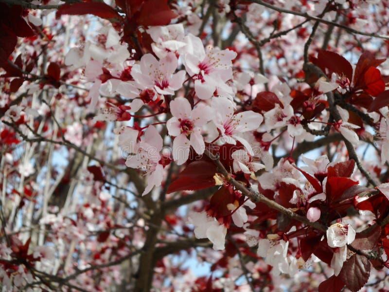 blom royaltyfria foton