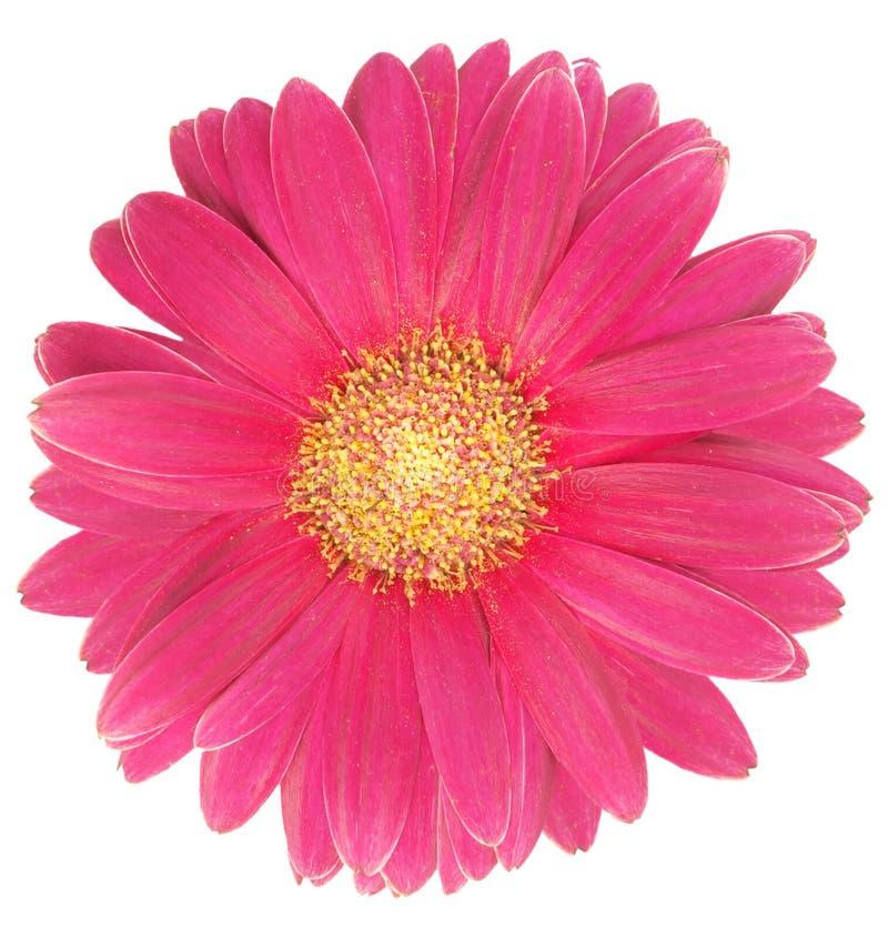 blom fotografering för bildbyråer
