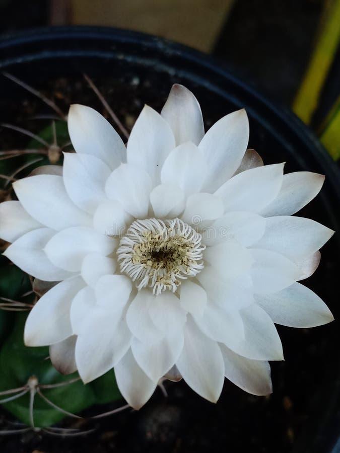 Blom av dagen arkivfoto