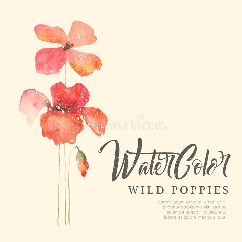 Blom- bakgrund för vattenfärg med röda vallmo royaltyfri illustrationer