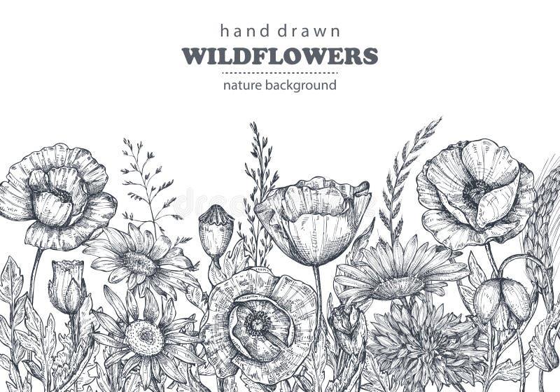Blom- bakgrunder med handen drog vallmo och annan blommar och växter royaltyfri illustrationer