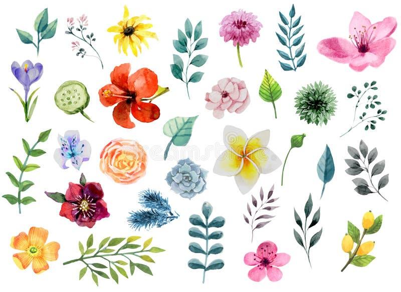 Blom- beståndsdeluppsättning för vattenfärg - blommor och blad vektor illustrationer
