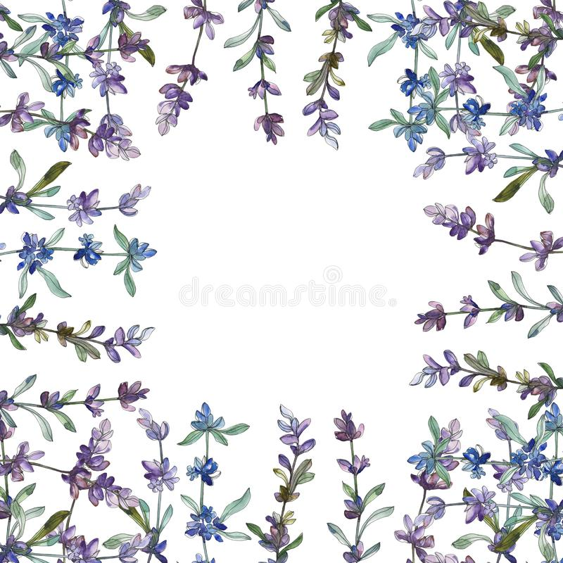 Blom- botanisk blomma f?r purpurf?rgad lavendel Upps?ttning f?r vattenf?rgbakgrundsillustration Fyrkant f?r ramgr?nsprydnad arkivfoto