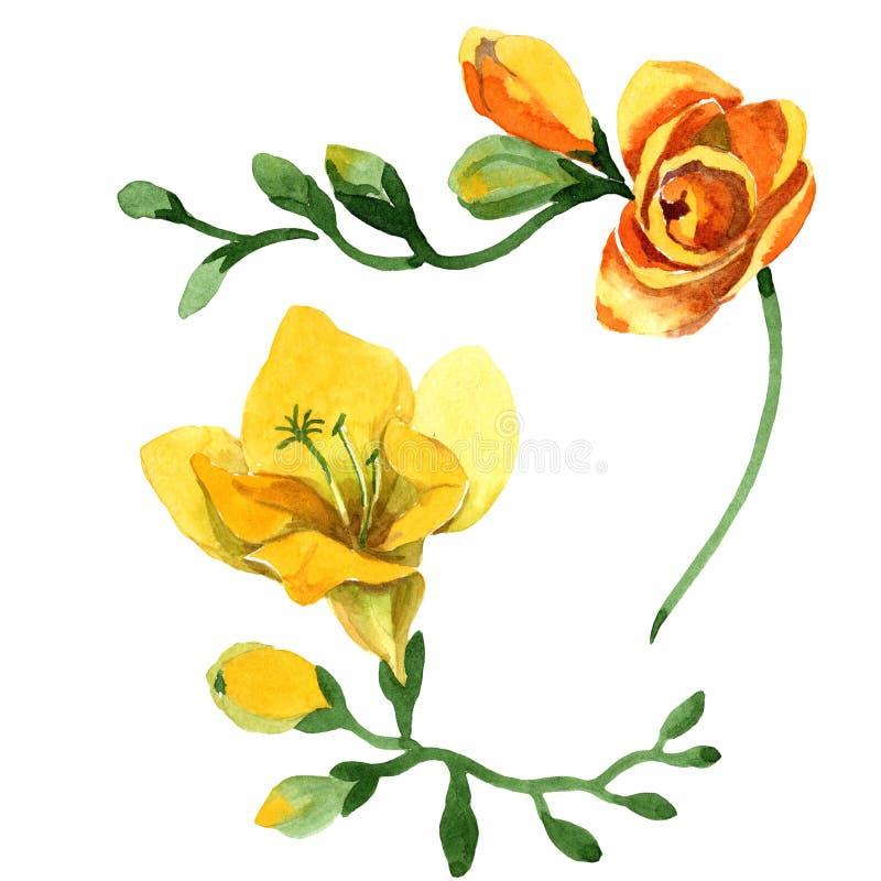 Blom- botaniska blommor för gul freesia För ackgroundillustration för vattenfärg b uppsättning Isolerad freesiaillustrationbest?n royaltyfri bild