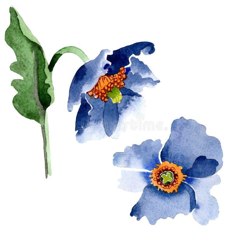 Blom- botaniska blommor f?r bl? vallmo Upps?ttning f?r vattenf?rgbakgrundsillustration Isolerad poppisillustrationbeståndsdel vektor illustrationer