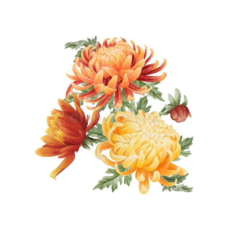 Blom- bukett för vattenfärg av krysantemumet stock illustrationer
