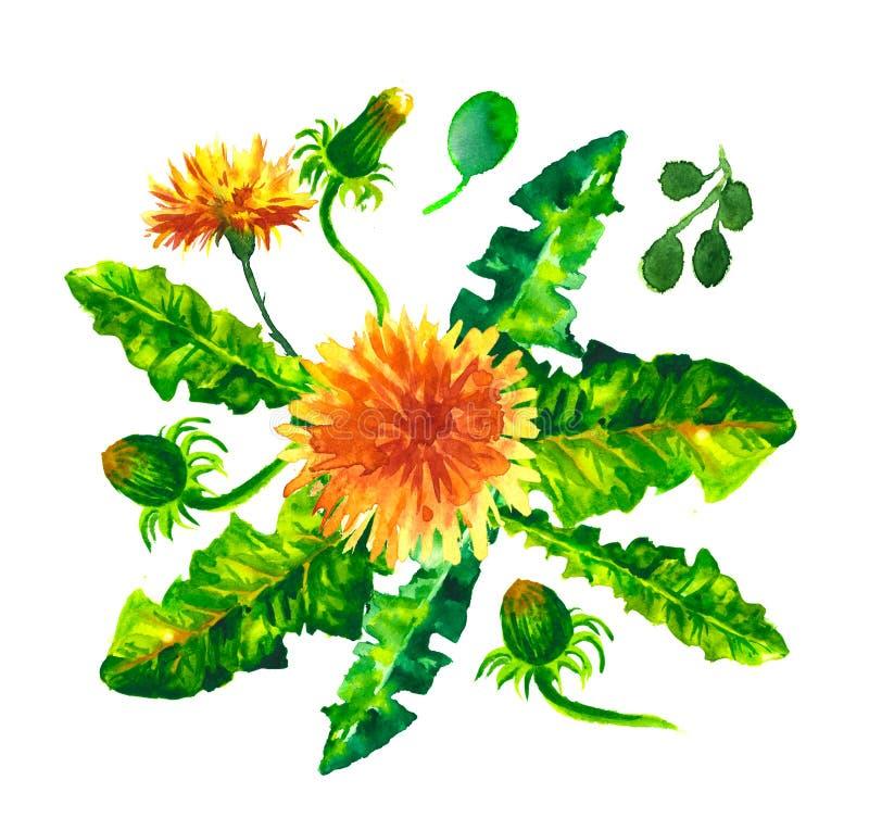 blom- dekorativa element många ställde in Samling med sidor Vår eller sommardesign för inbjudan-, bröllop- eller hälsningkort vektor illustrationer