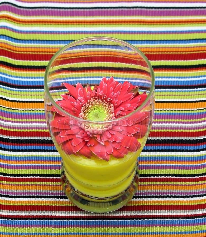 blom- drink royaltyfri foto