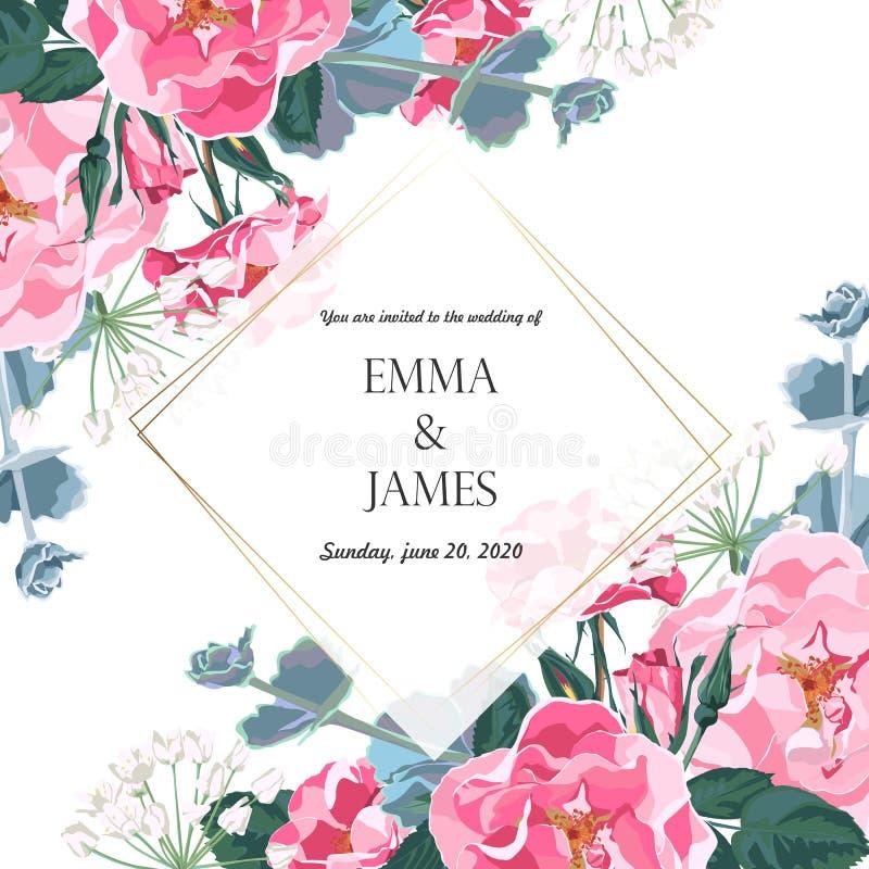 Blom- elegant inviterar guld- ramdesign för kort: rosa hundrosor för trädgårds- blomma, mjuk grönska vektor illustrationer