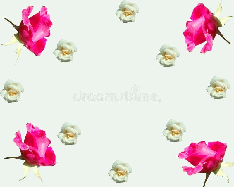 Blom- extas med rosor royaltyfria foton