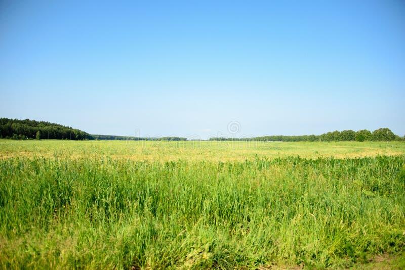 Blom- fält på en solig sommardag arkivbilder