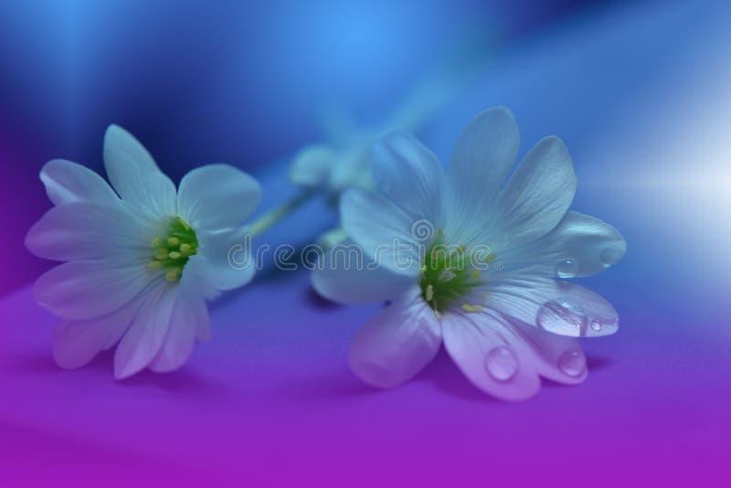 blom- fjäder för abstrakt konstbakgrundsdesign Liten droppe droppe Lilor blomma Vårgränsbakgrund arkivbilder