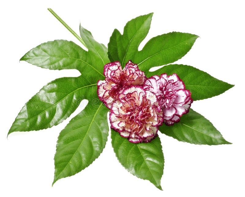 blom- garnering royaltyfri foto
