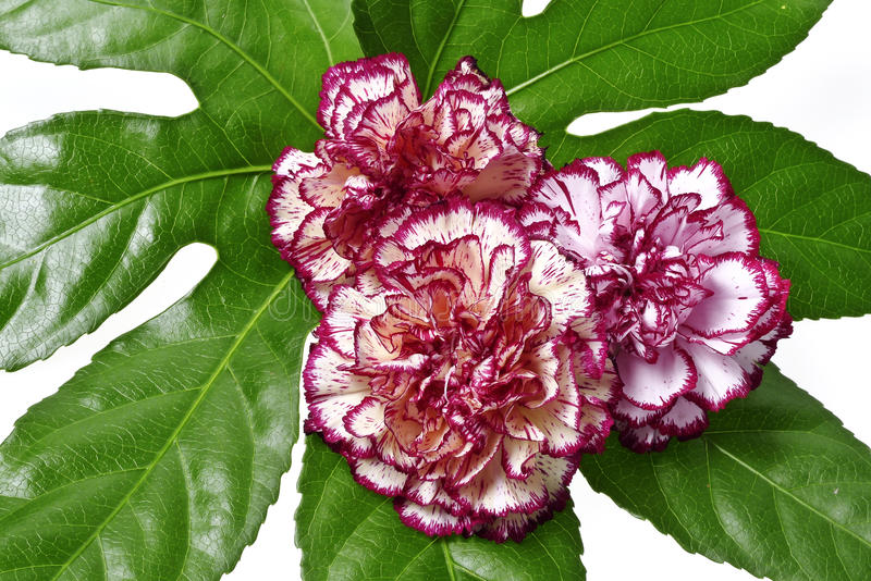 blom- garnering royaltyfria foton