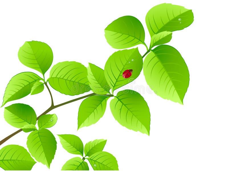 blom- grön nyckelpiga för bakgrundsfilial vektor illustrationer