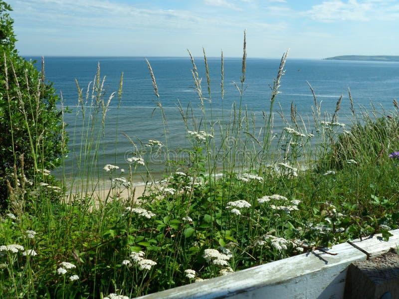 Blom- havssikt i Dorset royaltyfria bilder