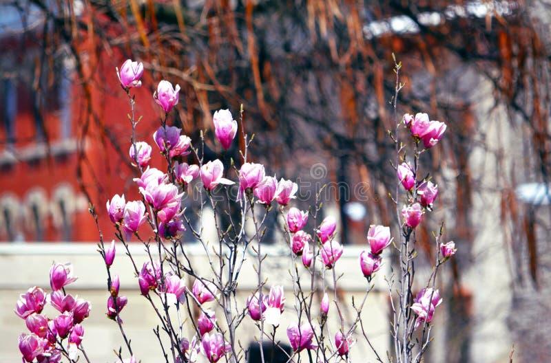 Blom i April arkivfoto