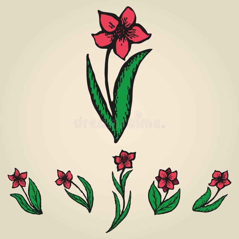 Blom- klottra blommar som pingstliljauppsättning stock illustrationer