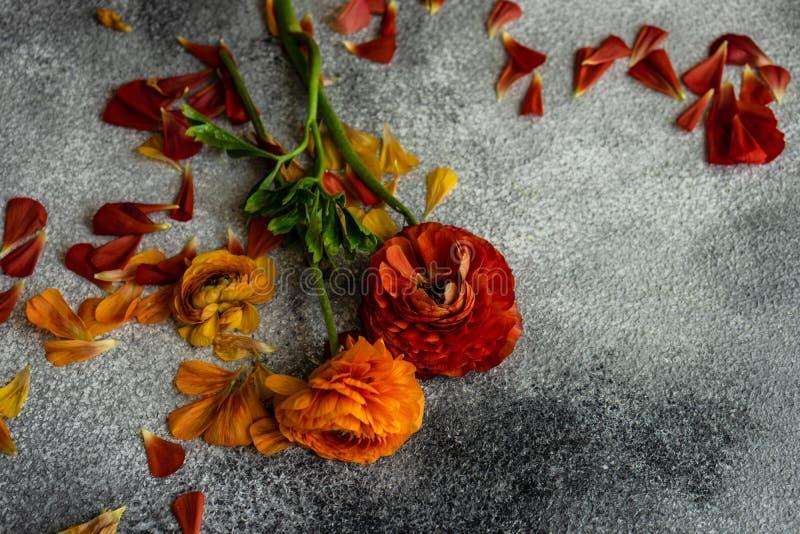 Blom- kort f?r sommar royaltyfri foto