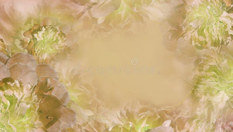 Blom- ljus pastellfärgad apelsin-gräsplan bakgrund Blommor och kronbladljus - orange pionnärbild greeting lyckligt nytt ?r f?r 20 fotografering för bildbyråer