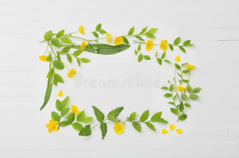 Blom- modell med gula smörblommor på vit bakgrund arkivbilder