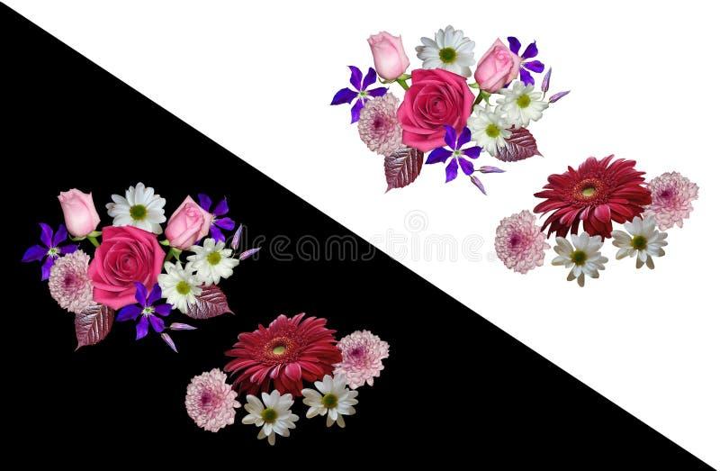 Blom- modell som isoleras på vit och svart bakgrund Rosor klematins, krysantemumet, gerbera samlade i en bukett arkivfoto